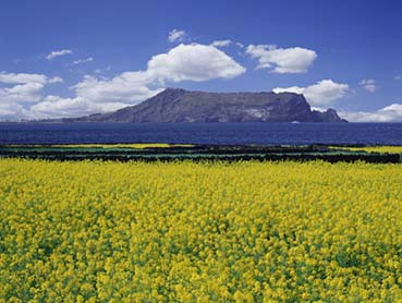 Travel to Korea: Jeju Island. Low cost vacation packages.